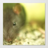 rat Canvas Prints featuring Rat... by Nature In Art...