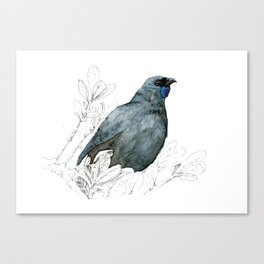 Kōkako, New Zealand native bird Canvas Print