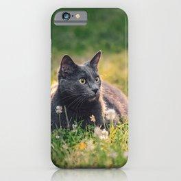Summer cat iPhone Case