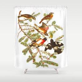 Rose-breasted Grosbeak Bird Shower Curtain