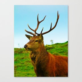 The Stag on the hill Canvas Print