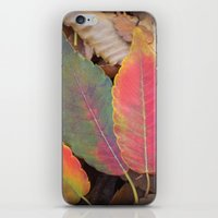 camus iPhone & iPod Skins featuring Hello Sweet Autumn by Graphic Tabby