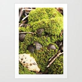 Stills-moss Art Print