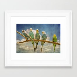 Parakeets perched on a branch againts a cloudy blue sky Framed Art Print