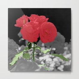 Roses, Color on B/W 2 Metal Print