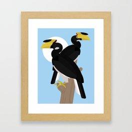 Malabar pied hornbills Framed Art Print
