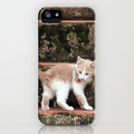 Cute Kitten Playing on the Stairs iPhone Case