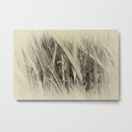 Ears of Barley Metal Print