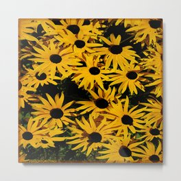 Sunshine Black Eyed Susan Flower Blossoms Metal Print