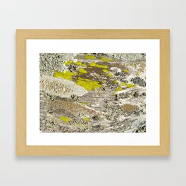 Lichens Over Bark 2 Framed Art Print