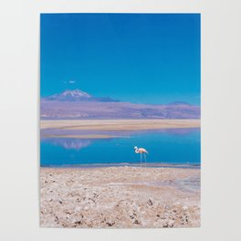 Flamingos in the Desert, San Pedro de Atacama, Chile Poster