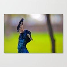 Pretty as a Peacock II Canvas Print