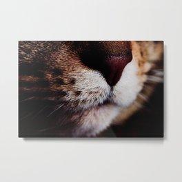 Kitten Nose Metal Print