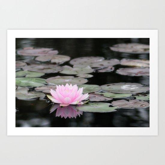 The Lily Pad Art Print