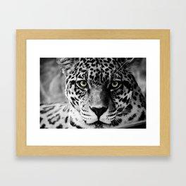 Leopard B&W Framed Art Print