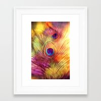 peacock feather Framed Art Prints featuring peacock feather by Sylvia Cook Photography