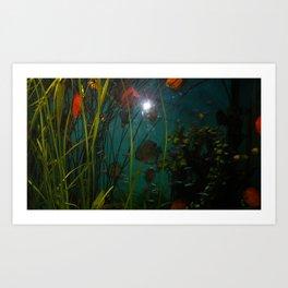 acvarium - red fish Art Print