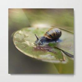 Snailing Metal Print