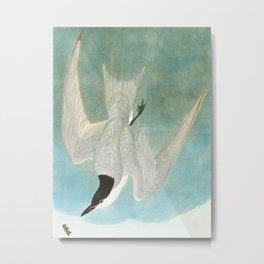 Marsh Tern Metal Print