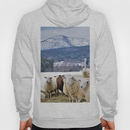 Sheep with a View of the Adirondack Mountains Hoody
