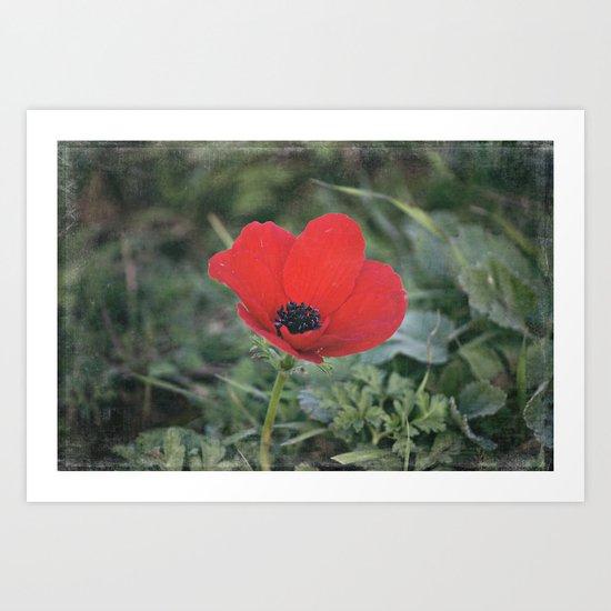 Wild Anemone Art Print