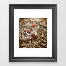 Fleur du désert Framed Art Print