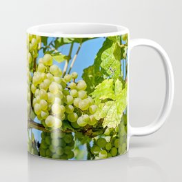 Delicious growing green grapes bunch farming on a beautiful blue summer sky background Coffee Mug