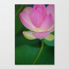 Lotus Blossom Flower 30 Canvas Print