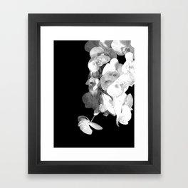 White Orchids Black Background Framed Art Print