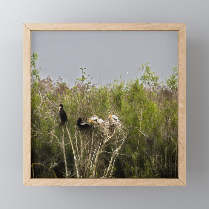 Anhinga Family Tree Framed Mini Art Print