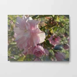 sakura bloom Metal Print