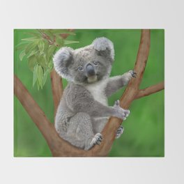 Blue-eyed Baby Koala Bear Throw Blanket