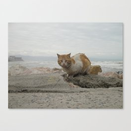 Braving the weather... Canvas Print