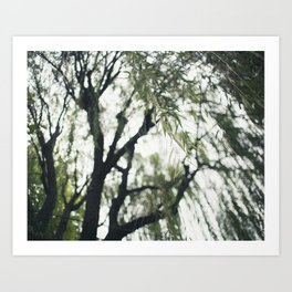 Beneath the Willow Tree Art Print