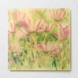 Vintage Spring Coral Pink Daisy Flowers Metal Print