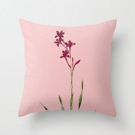 Vintage Bugle Lily Botanical Illustration on Pink Throw Pillow