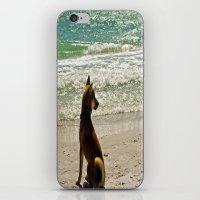 shiba iPhone & iPod Skins featuring Shiba Inu by Blue Lightning Creative