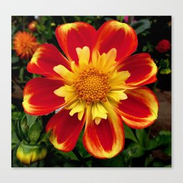 Sunburst Zinnia Canvas Print