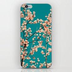 willow catkin II iPhone & iPod Skin