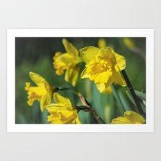 Dancing Daffodil Art Print
