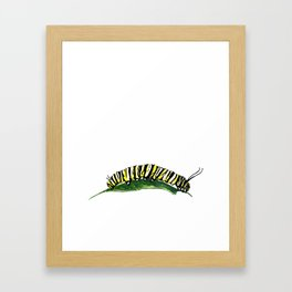 Watercolor Monarch Caterpillar #2 by Artume Framed Art Print