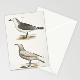 285 American Gull (Larus zonorhyncus) 286 Winter Gull (Larus argentatus)  from Zoology of New York ( Stationery Cards