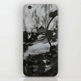 Snow covered ivy iPhone Skin