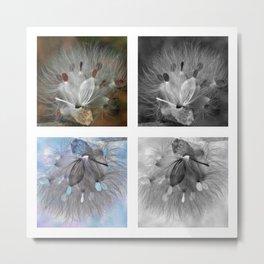 Milkweed Positive Negative Study Metal Print