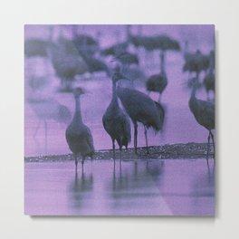 NOISY BIRDS Metal Print