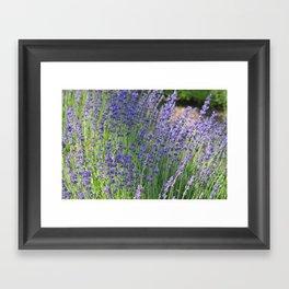 Lavender Wave Framed Art Print