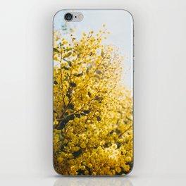Acacia Botanical Print iPhone Skin