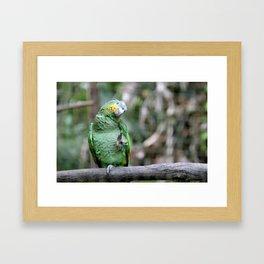 Waving Parrot Framed Art Print