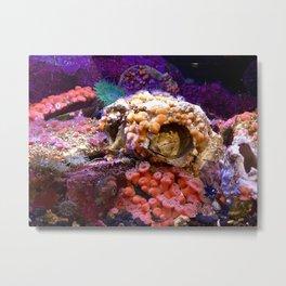 Coral Habitat Metal Print