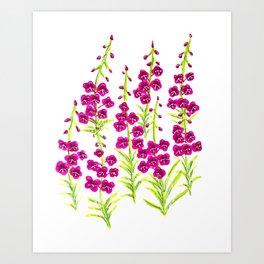 Fireweed Art Print